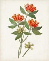 Botanical of the Tropics V Fine Art Print