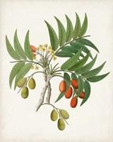 Botanical of the Tropics VI Fine Art Print