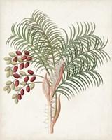 Botanical of the Tropics VII Fine Art Print