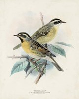 Antique Birds I Fine Art Print