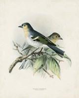Antique Birds II Fine Art Print