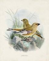 Antique Birds III Fine Art Print