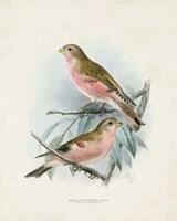 Antique Birds IV Fine Art Print