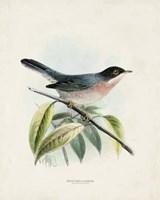 Antique Birds V Fine Art Print