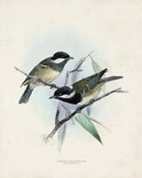 Antique Birds VII Fine Art Print