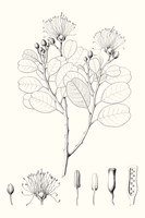 Illustrative Leaves I Fine Art Print