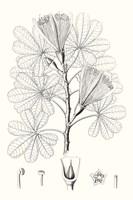 Illustrative Leaves II Fine Art Print