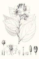 Illustrative Leaves III Fine Art Print