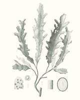 Sage Green Seaweed I Fine Art Print