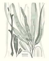 Sage Green Seaweed II Fine Art Print