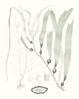 Sage Green Seaweed III Fine Art Print