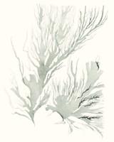 Sage Green Seaweed IV Fine Art Print