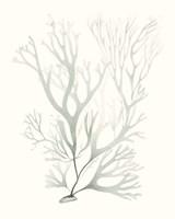 Sage Green Seaweed V Fine Art Print