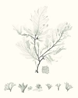 Sage Green Seaweed VII Fine Art Print
