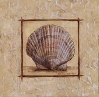 Fan Shell Fine Art Print