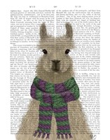 Llama with Purple Scarf, Portrait Book Print Fine Art Print