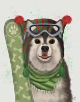 Husky Snowboard Fine Art Print