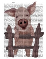 Pig On Fence Book Print Fine Art Print