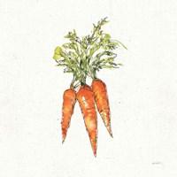 Veggie Market V Carrots Fine Art Print