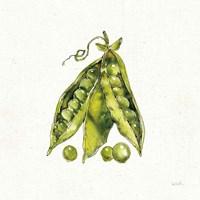 Veggie Market IV Peas Fine Art Print
