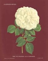 Yellow Rose Pomegranate Fine Art Print