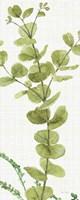 Mixed Greens LX v2 Fine Art Print