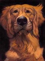 Golden Fine Art Print