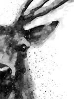Deer At Attention Fine Art Print
