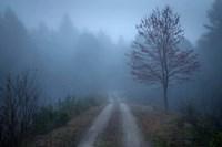 Spring Fog Fine Art Print