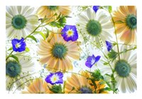 Gerbera flowers and Blue Ensign Fine Art Print