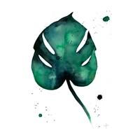Beautiful Monstera Fine Art Print
