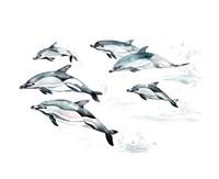Common Dolphin Fine Art Print