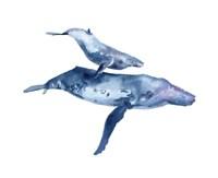 Mother & Calf Humpback Fine Art Print