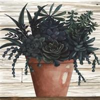Remarkable Succulents III Fine Art Print