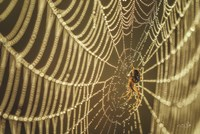 The Spider and Her Jewels Fine Art Print
