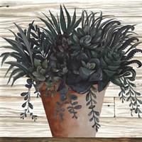 Remarkable Succulents I Fine Art Print