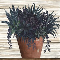 Remarkable Succulents II Fine Art Print