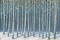 Shimmering Birches Framed Print