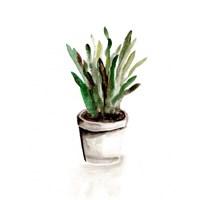 Potted Botanicals III Fine Art Print