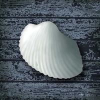 Seashore Shells Navy I Fine Art Print