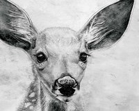 Portrait of a Fawn Fine Art Print