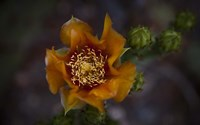 Close Up of Orange Flower Fine Art Print