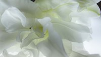 Close Up of White Flower Fine Art Print