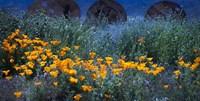 Field of Orange Flowers Fine Art Print
