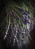 Purple Buds Fine Art Print