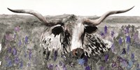 Longhorn in Flower Field Fine Art Print