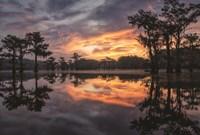 Sunrise in the Swamps Fine Art Print
