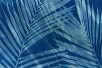 Cyanotype Tropical VIII Fine Art Print