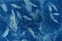 Cyanotype Tropical VII Fine Art Print