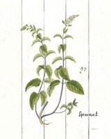 Cottage Herbs IV Fine Art Print